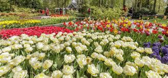 keukenhof flower gardens visit the beautiful keukenhof gardens tours u0026 tickets