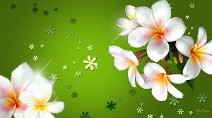 Beautiful Flowers Plumerias Beautiful Flowers Wallpaper Hd Download Desktop