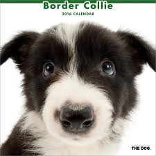 border collie dogbreed gifts com border collie calendars