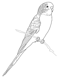 african grey parrot coloring free printable coloring pages