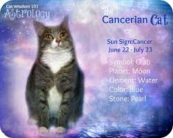 mona cat moon cat astrology u0026 meet peanut u2013 cat wisdom 101