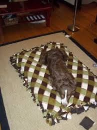 Cute Puppy Beds Best 25 Homemade Dog Bed Ideas On Pinterest Coconut Oil Dogs