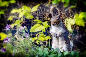 how to keep ground squirrels out of your garden home outdoor