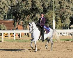 laceys arabian ranch u2013 arabian and half arabian sport horses
