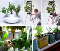 indoors garden ismail high cost of living grow your own veggie