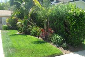 Tropical Backyard Ideas Tropical Landscaping Ideas For Front Yard Amys Office Landscape