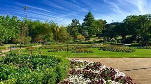 Botanic Gardens Brisbane City Where To Study In Brisbane City Choose Brisbane