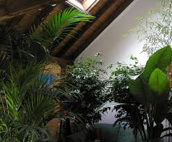 home interior plants tropical plants mediterranean plants