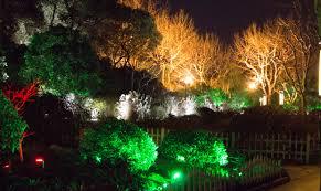 Tree Lights Landscape Free Images Branch Light Flower Tree