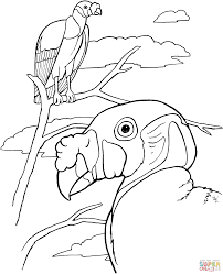 king vultures coloring page free printable coloring pages
