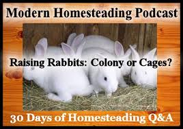 raising rabbits colony or cages small town homestead