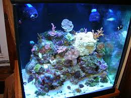 Aquascape Reef Show Me Your Awesome Nano Aquascape Reef Central Online Community