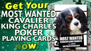 cavalier king charles cards deck