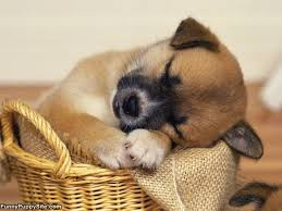 cute basket buddies wallpapers 54 best cute pics images on pinterest cute pics