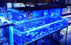Cool Led Lights by Led Bulb For Aquarium 136 Cool Ideas For U2013 Urbia Me