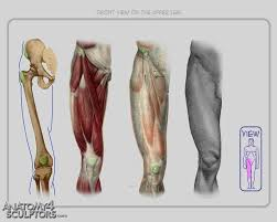 Human Anatomy Reference 132 Best Zbrush Sculpting U0026 Human Anatomy Reference Images On