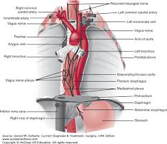 Esophagus And Stomach Anatomy Esophagus U0026 Diaphragm Current Diagnosis U0026 Treatment Surgery