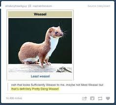 Weasel Meme - least weasel tumblr know your meme