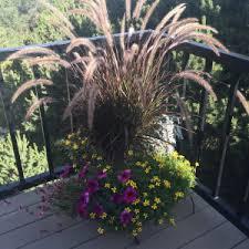 of autumn grasses in santa fe santa fe gardening