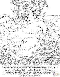 100 eagle printable coloring pages pages bald eagle coloring