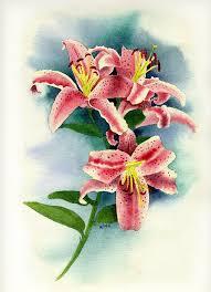 stargazer lilly stargazer lilies painting by brett winn