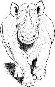 rhino coloring page kids coloring free kids coloring