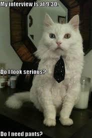 Success Cat Meme - job interview went well success images of job interview