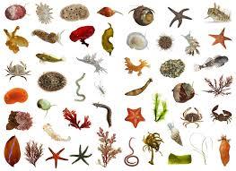86 percent of earth u0027s species still unknown