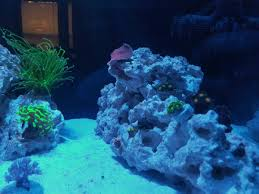 Floating Aquascape Reef2reef Saltwater And Reef Aquarium Forum - syoung u0027s im 25 lagoon build reef2reef saltwater and reef