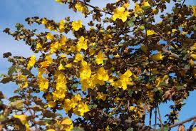 california native plant society blog a california native plant garden in san diego county march 2013