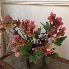 florist seattle seattle florist flower delivery by lavassar florists