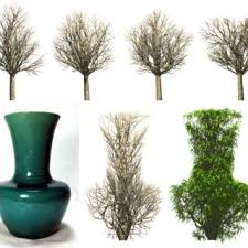 different types of trees generation of different types of tree left an initial frame of the