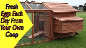 how to build a large premium chicken house that is easy to