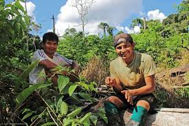 native plants in the amazon rainforest fauna forever research and conservation in the amazon rainforest