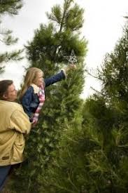 Christmas Tree Farm Va - oklahoma christmas tree farms travelok com oklahoma u0027s official