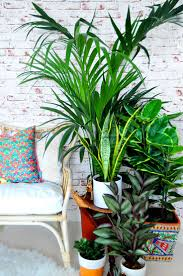 134 best indoor plants in interior images on pinterest living