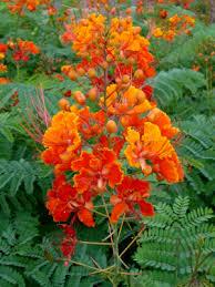 flowers tucson postcard from tucson caltrain days