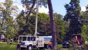 contact huffman tree company springfield oh 937 828 1682