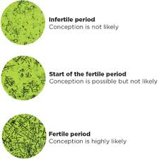 ferning pattern in spanish trying to conceive ovu control tells you when it s the right time