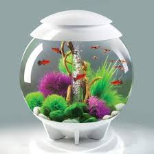 biorb halo 60 aquarium