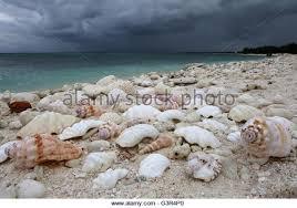 christmas island kiribati micronesia stock photos u0026 christmas
