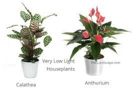 low light houseplants 14 top houseplants you should pick for very low light area tnc
