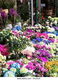 Flowers Wholesale Wholesale District New York City Stock Photos U0026 Wholesale District
