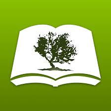 olive tree blog
