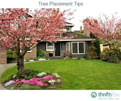 decorative trees for front yard best front yard tree ideas ideas on