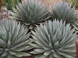 Desert Landscape Ideas For Backyards by Landscaping Design Ideas The Agave Outdoors Pinterest