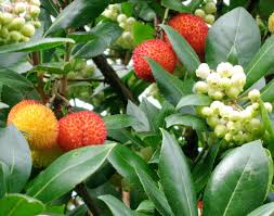 seattle garden ideas a dozen evergreen trees for small gardens