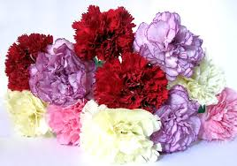 carnations flowers carnations flower of the gods wf s