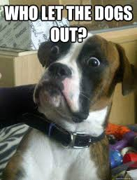 Who Let The Dogs Out Meme - who let the dogs out shocked dog quickmeme