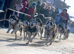 Baden Im Harz Ski Saison Im Harz Startet 300 Schlittenhunde Liefern Sich Rennen